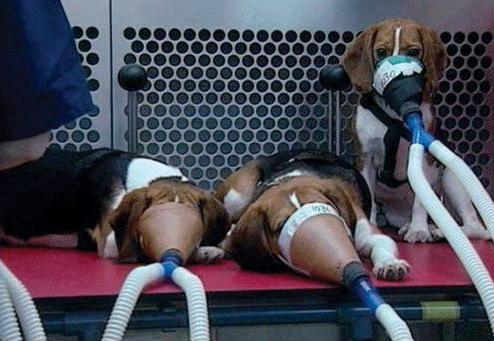 sigaranin-hayvanlar-uzerinde-test-edilmesi
